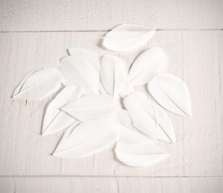 Piume bianche per bricolage